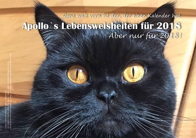 Kater Apollo Kalender 2018