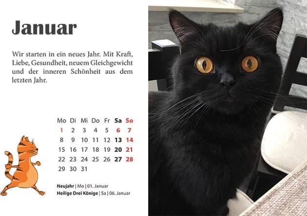 Kater Kalender Januar 2018