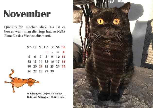 Kater Kalender November 2018