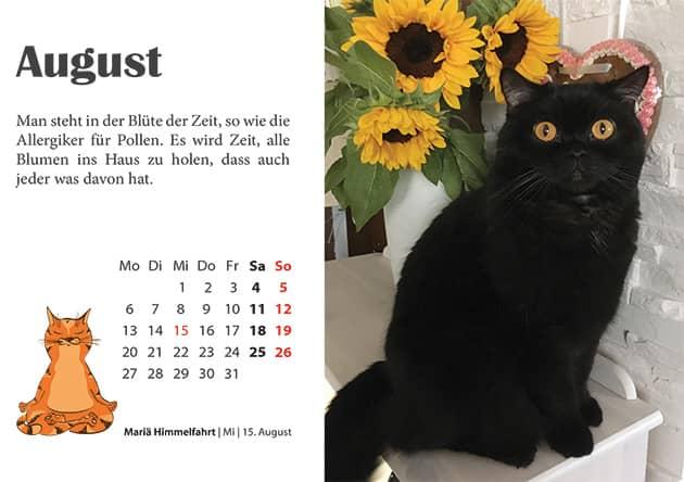 Kater Kalender August 2018