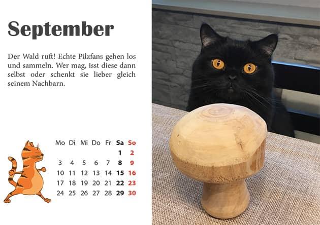 Kater Kalender September 2018